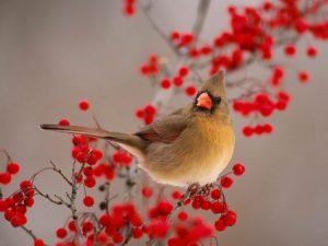 cardinal red flowers guidebook